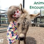Animal Encounters (Beyond the Zoo and Aquarium)