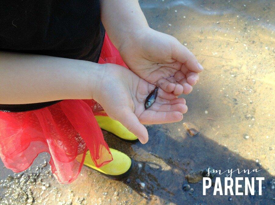Smyrna Parent | Live, Love, Local